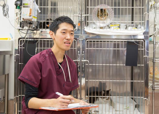 資格 師 動物 看護 病院